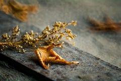 Φθινόπωρο Τα φύλλα της κίτρινης πτώσης στο έδαφος στοκ εικόνα με δικαίωμα ελεύθερης χρήσης