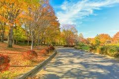 Φθινόπωρο της Ιαπωνίας, όμορφα φύλλα φθινοπώρου του πάρκου Obuse, δημόσιες σχέσεις του Ναγκάνο στοκ εικόνα