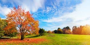 Φθινόπωρο, τοπίο πτώσης ζωηρόχρωμο δέντρο φύλλων