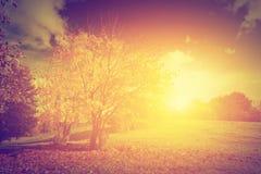 Φθινόπωρο, τοπίο πτώσης κόκκινος τρύγος ύφους κρίνων απεικόνισης Στοκ Εικόνες