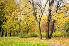 Φθινόπωρο, τοπίο πτώσης Πορτοκαλί, ζωηρόχρωμο φύλλωμα Πάρκο Στοκ φωτογραφία με δικαίωμα ελεύθερης χρήσης