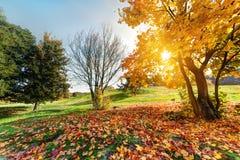 Φθινόπωρο, τοπίο πτώσης στο πάρκο Στοκ Εικόνες