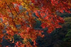 Φθινόπωρο του Κιότο Στοκ εικόνα με δικαίωμα ελεύθερης χρήσης