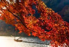 Φθινόπωρο του Κιότο Στοκ Εικόνα