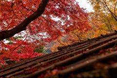 Φθινόπωρο του Κιότο Στοκ φωτογραφία με δικαίωμα ελεύθερης χρήσης