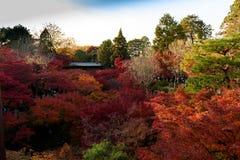 Φθινόπωρο του Κιότο Στοκ Εικόνες
