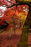 Φθινόπωρο του Κιότο Στοκ Φωτογραφία