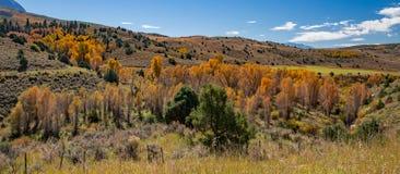 Φθινόπωρο του Κολοράντο στοκ εικόνες με δικαίωμα ελεύθερης χρήσης
