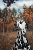 Φθινόπωρο Το χαριτωμένο σκυλί απολαμβάνει τον καιρό Στοκ φωτογραφία με δικαίωμα ελεύθερης χρήσης