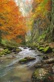 Φθινόπωρο φαραγγιών Galbena Στοκ φωτογραφία με δικαίωμα ελεύθερης χρήσης