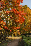 φθινόπωρο φωτεινό Στοκ φωτογραφία με δικαίωμα ελεύθερης χρήσης