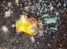 Φθινόπωρο φύλλων κολπίσκου βράχου στοκ φωτογραφίες