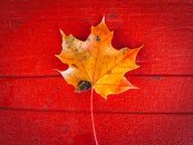 Φθινόπωρο φύλλων σφενδάμου στοκ εικόνες με δικαίωμα ελεύθερης χρήσης