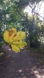 Φθινόπωρο φύσης φύλλων Στοκ Εικόνες