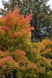 Φθινόπωρο, φύση, δασικός νεφελώδης ουρανός φθινοπώρου χρυσά φύλλα φθινοπώρου στοκ φωτογραφία