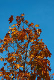 Φθινόπωρο φύλλο-3 Στοκ φωτογραφία με δικαίωμα ελεύθερης χρήσης