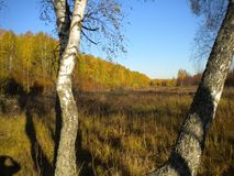 Φθινόπωρο, χρυσός τομέας, φωτεινός ήλιος, μακριά δάσος στοκ φωτογραφία με δικαίωμα ελεύθερης χρήσης