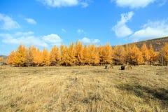 φθινόπωρο χρυσό Στοκ Εικόνες