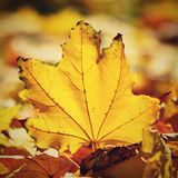 Φθινόπωρο Όμορφα ζωηρόχρωμα φύλλα στα δέντρα στο χρόνο φθινοπώρου Φυσικό εποχιακό υπόβαθρο χρώματος Στοκ φωτογραφίες με δικαίωμα ελεύθερης χρήσης