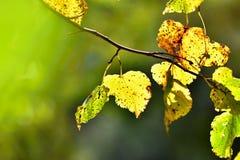 Φθινόπωρο Όμορφα ζωηρόχρωμα φύλλα στα δέντρα στο χρόνο φθινοπώρου Φυσικό εποχιακό υπόβαθρο χρώματος Στοκ φωτογραφία με δικαίωμα ελεύθερης χρήσης