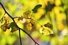 Φθινόπωρο Όμορφα ζωηρόχρωμα φύλλα στα δέντρα στο χρόνο φθινοπώρου Φυσικό εποχιακό υπόβαθρο χρώματος Στοκ Εικόνες