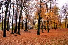 φθινόπωρο Στοκ Εικόνα