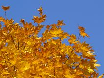 φθινόπωρο 11 Στοκ Φωτογραφίες