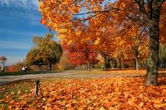 φθινόπωρο Στοκ Εικόνες