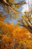 φθινόπωρο Στοκ φωτογραφίες με δικαίωμα ελεύθερης χρήσης