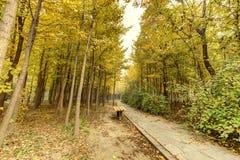 Φθινόπωρο Στοκ εικόνες με δικαίωμα ελεύθερης χρήσης