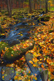 φθινόπωρο 6 Στοκ Φωτογραφία
