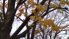 Φθινόπωρο απόθεμα βίντεο