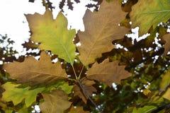 Φθινόπωρο Στοκ φωτογραφία με δικαίωμα ελεύθερης χρήσης