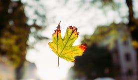 Φθινόπωρο Στοκ εικόνα με δικαίωμα ελεύθερης χρήσης