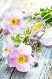 Φθινόπωρο anemones Στοκ φωτογραφία με δικαίωμα ελεύθερης χρήσης