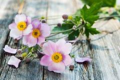 Φθινόπωρο anemones Στοκ εικόνα με δικαίωμα ελεύθερης χρήσης