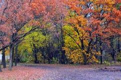 Φθινόπωρο Colurful στοκ φωτογραφίες