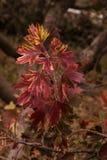 Φθινόπωρο Krondal Στοκ φωτογραφία με δικαίωμα ελεύθερης χρήσης