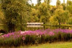 Φθινόπωρο ladscape με τα λουλούδια Στοκ εικόνα με δικαίωμα ελεύθερης χρήσης