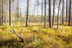 Φθινόπωρο ladscape Στοκ φωτογραφίες με δικαίωμα ελεύθερης χρήσης