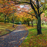 Φθινόπωρο Laves στη Χιροσίμα Central Park στην Ιαπωνία στοκ εικόνες