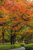 Φθινόπωρο Laves στη Χιροσίμα Central Park στην Ιαπωνία στοκ εικόνες με δικαίωμα ελεύθερης χρήσης