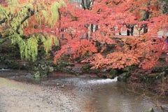 Φθινόπωρο Laves στο πάρκο του Νάρα στο Νάρα στοκ εικόνες