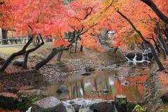 Φθινόπωρο Laves στο πάρκο του Νάρα στο Νάρα στοκ φωτογραφία με δικαίωμα ελεύθερης χρήσης