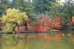 Φθινόπωρο Laves στο πάρκο του Νάρα στοκ εικόνα