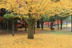 Φθινόπωρο Laves στο πάρκο του Νάρα στοκ φωτογραφία