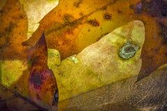 Φθινόπωρο Laves στοκ εικόνες με δικαίωμα ελεύθερης χρήσης