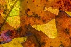 Φθινόπωρο Laves στοκ φωτογραφίες με δικαίωμα ελεύθερης χρήσης