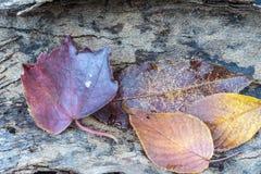 Φθινόπωρο Laves στοκ φωτογραφία