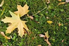 φθινόπωρο leafes Στοκ εικόνες με δικαίωμα ελεύθερης χρήσης